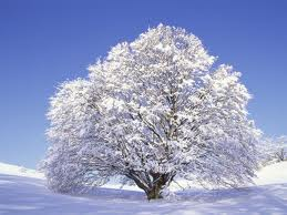tree with snow on it