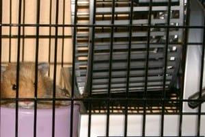 Rat Race, an Unexpected Lesson about Rest