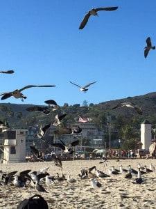 Laguna Seagulls