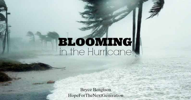 Blooming in the Hurricane