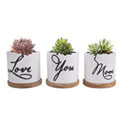 Love you mom planter set